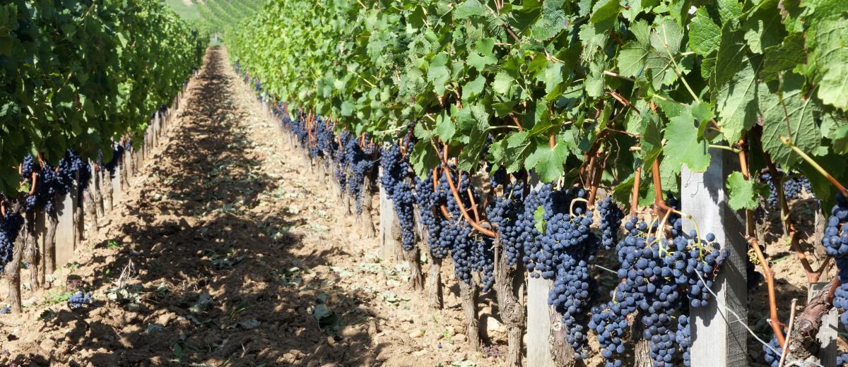 3 top vineyards for your bordeaux wine tasting trip oliver s travels