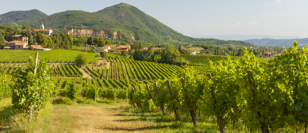 Image result for italy vineyards