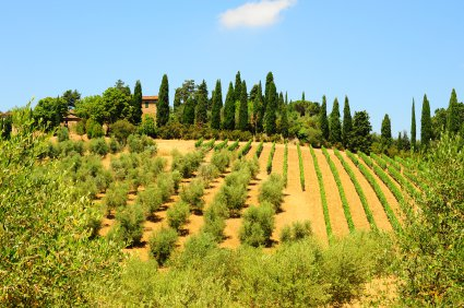 Olive Oil Hill, Italy