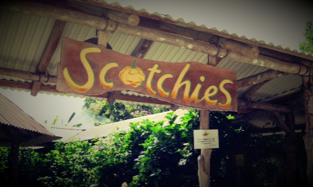 Scotchies - Jamaica - Oliver's Travels