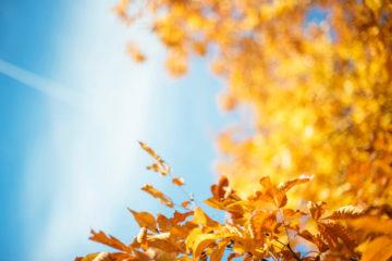 3 Ideas For An Ideal Family Autumn Break