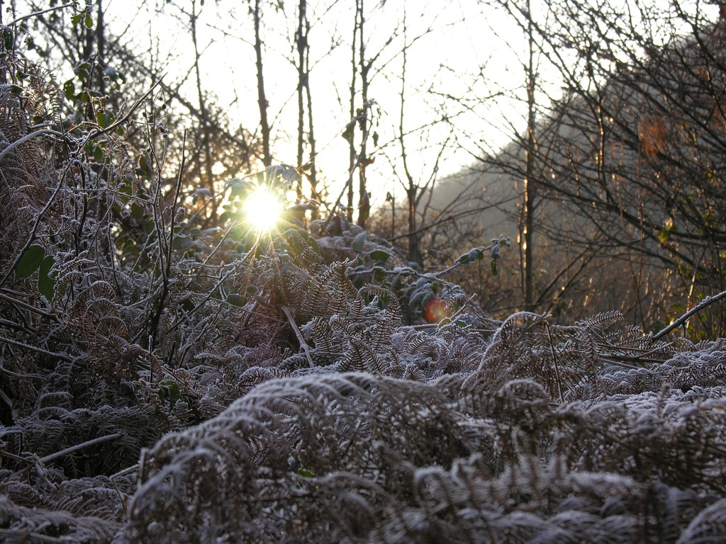 Cornwall Frost - Oliver's Travels (Image via Nick Stenning on Flickr)