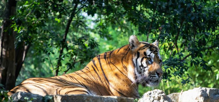 Pistoia Zoo