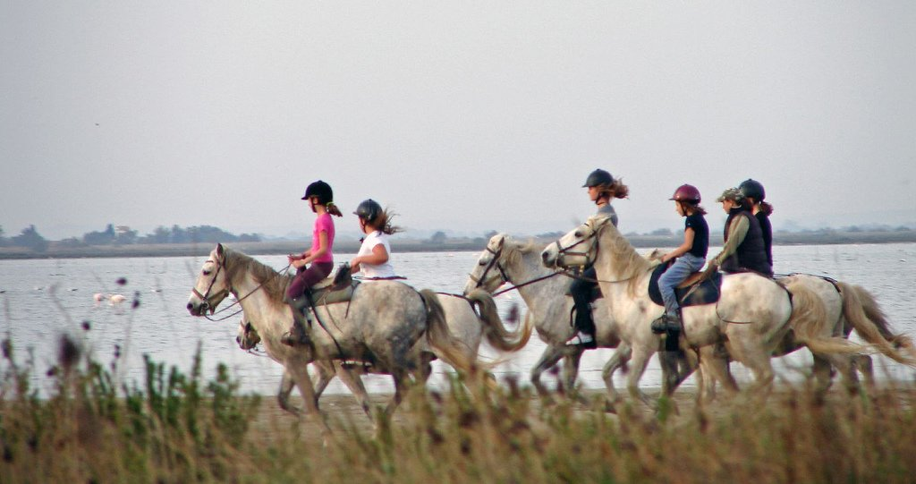 Camargue horses - Villas in France - Oliver's Travels