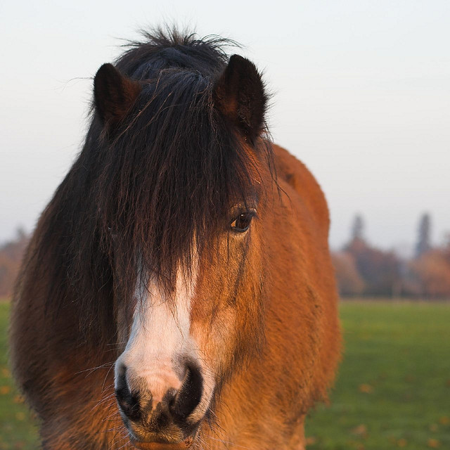 Pony @Andy Piper - Flickr