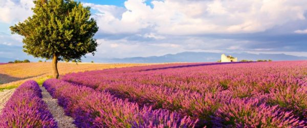 Summer in Provence hero