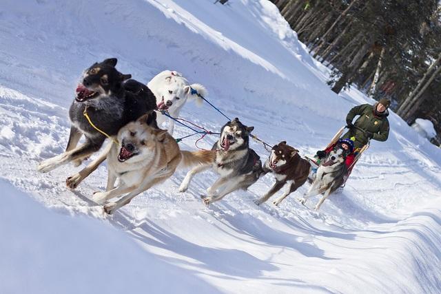 Husky sledging - luxury French ski chalets - Oliver's Travels