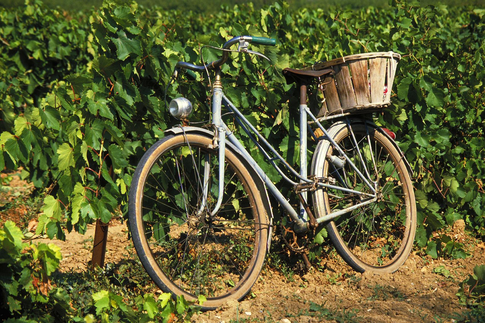 Napa Wine Tour For Novices