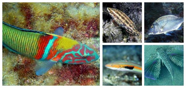 Cap Blanc Aquarium Ibiza