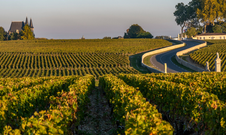 Route des Chateaux, Vineyard in Medoc