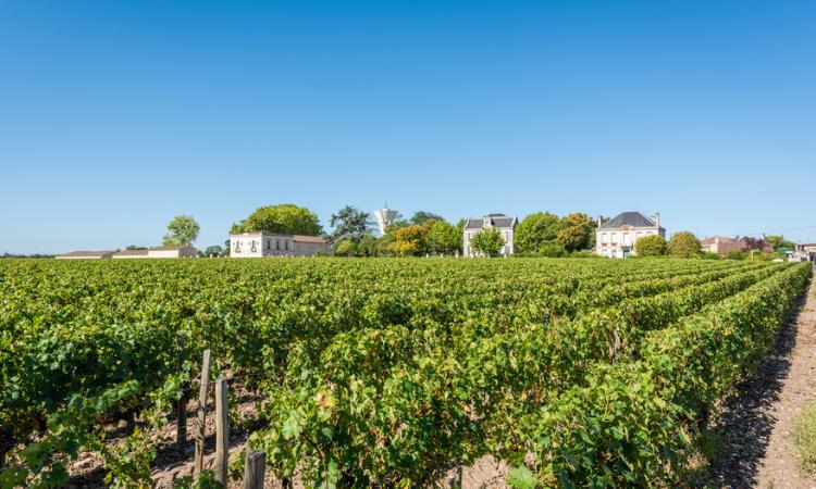 Vineyard of Margaux
