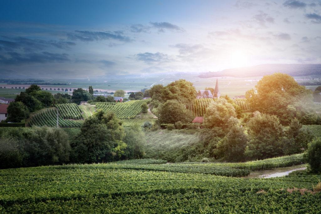 Vineyard landscape, Montagne de Reims, France | authentic champagne