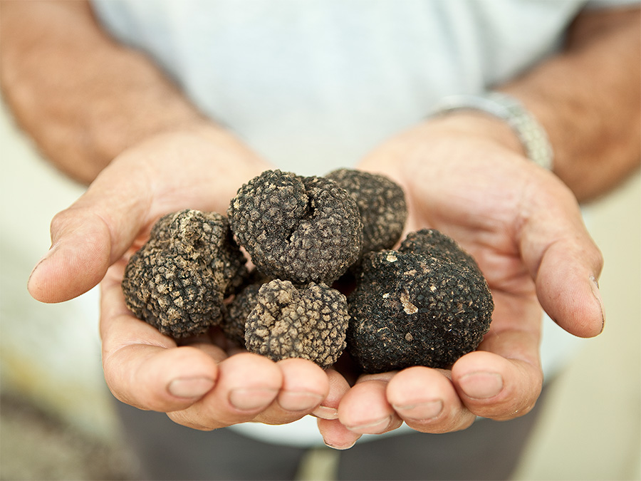 Truffle Hunting - Via Umbria