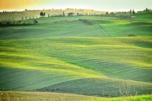 Fields in Tuscany