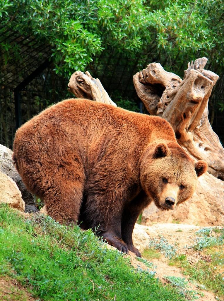 Bear - La Reserva - Mallorca