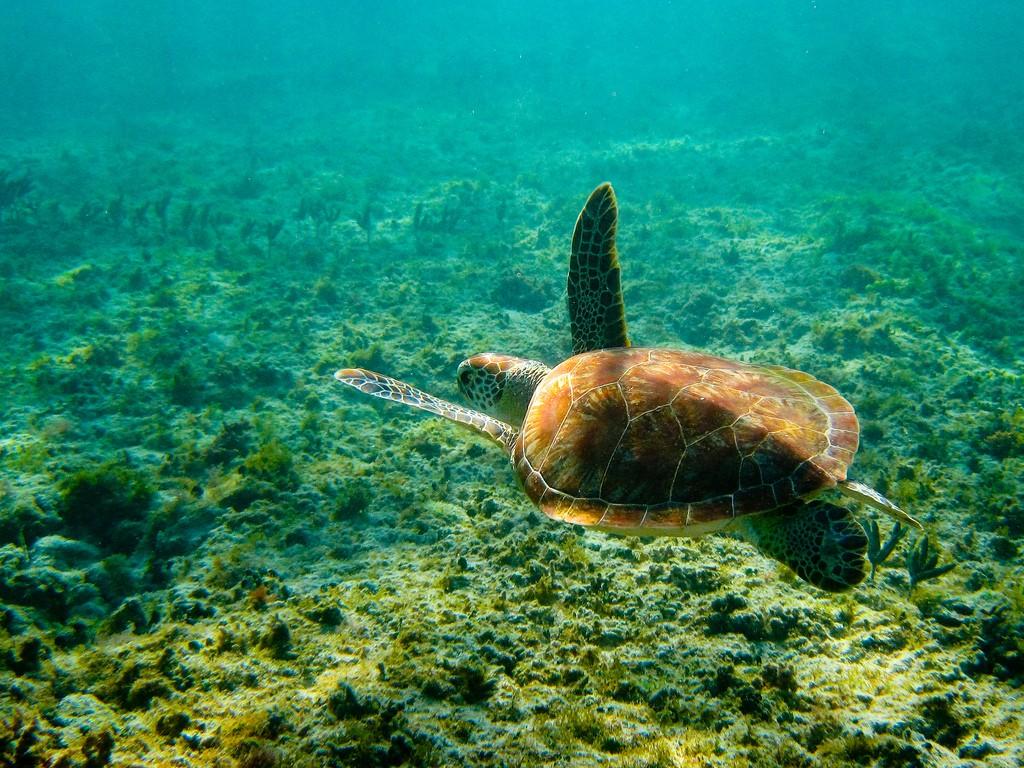 Turtle - Nathan Slemers