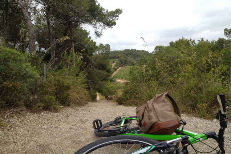 Group Activities in Mallorca | Image of Bike on Trail