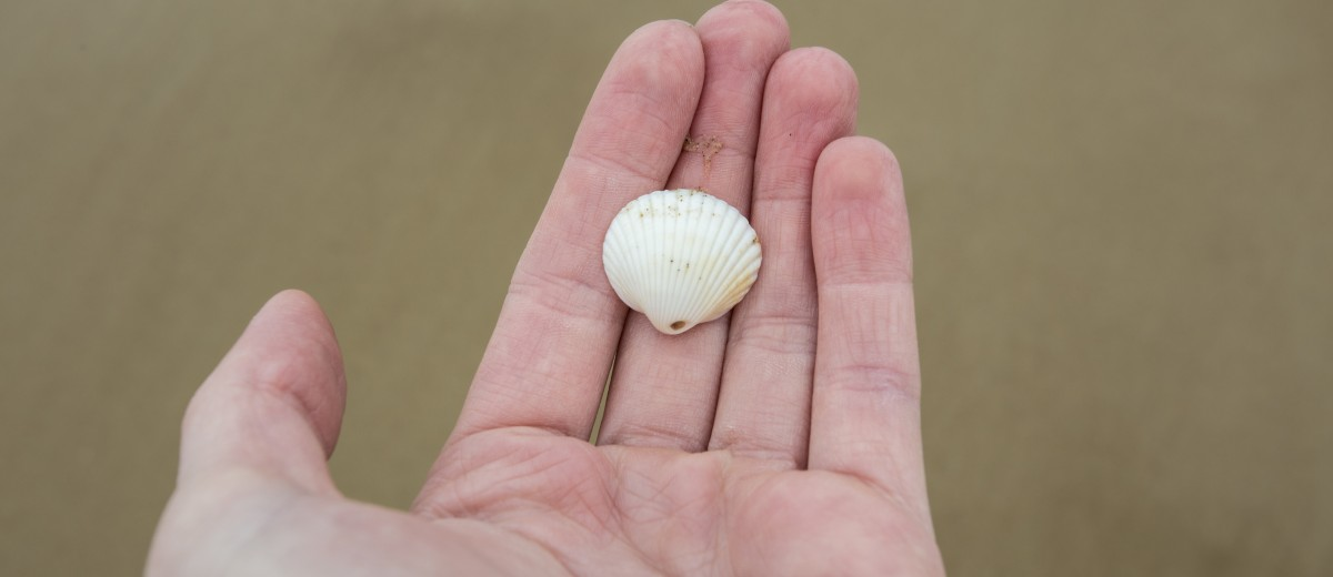 Sea shell in Dymchurch