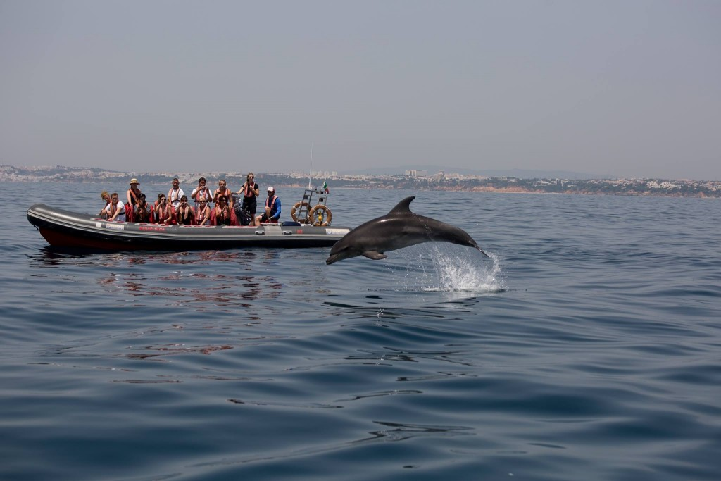 Dolphins Driven- Algarve