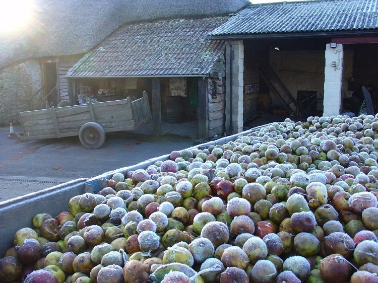 Perry's Cider - Somerset