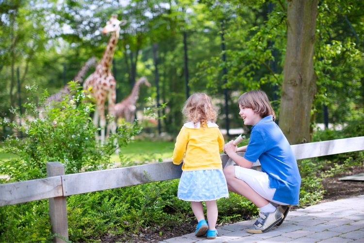Happy laughing boy and his toddler sister cute little girl with curly hair wearing a dress having fun together in a zoo watching giraffes and other animals on a day trip during summer vacation | best things to do with kids in Loire Valley