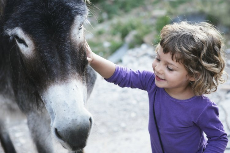 girl wearing a purple shirt smiling next to donkey in a petting zoo | best things to do with kids in Loire Valley