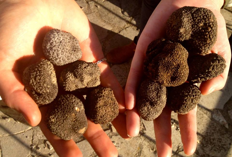 Truffle Tour with Les Pastras  - Provence