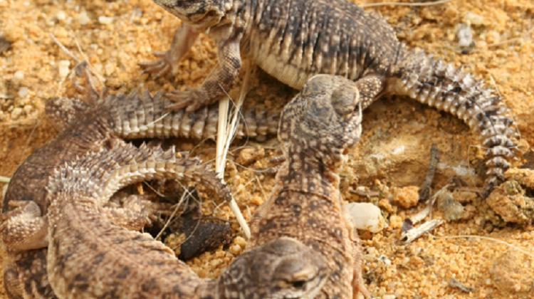 Alligator Bay -  France's reptilian attraction
