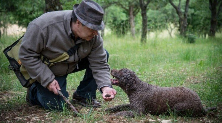 Truffle hunting -  Burgundy