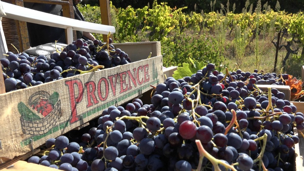 wine-in-provence-tours