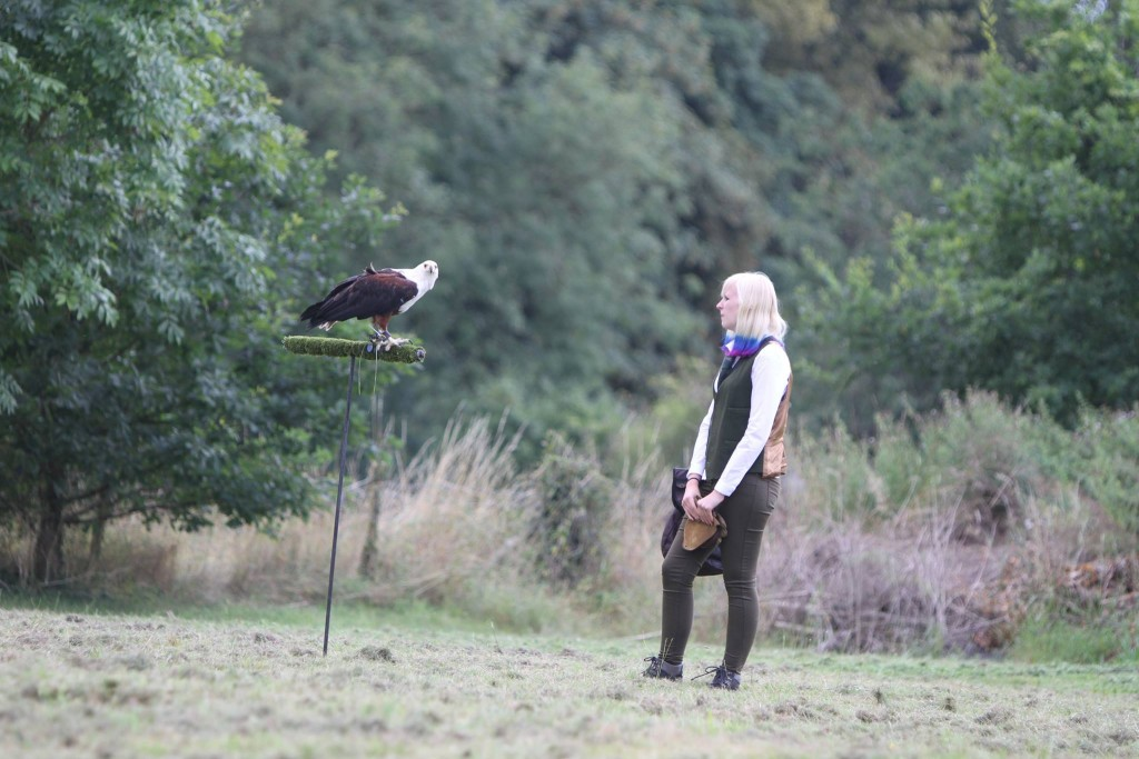 The Falconry Centre - Midlands