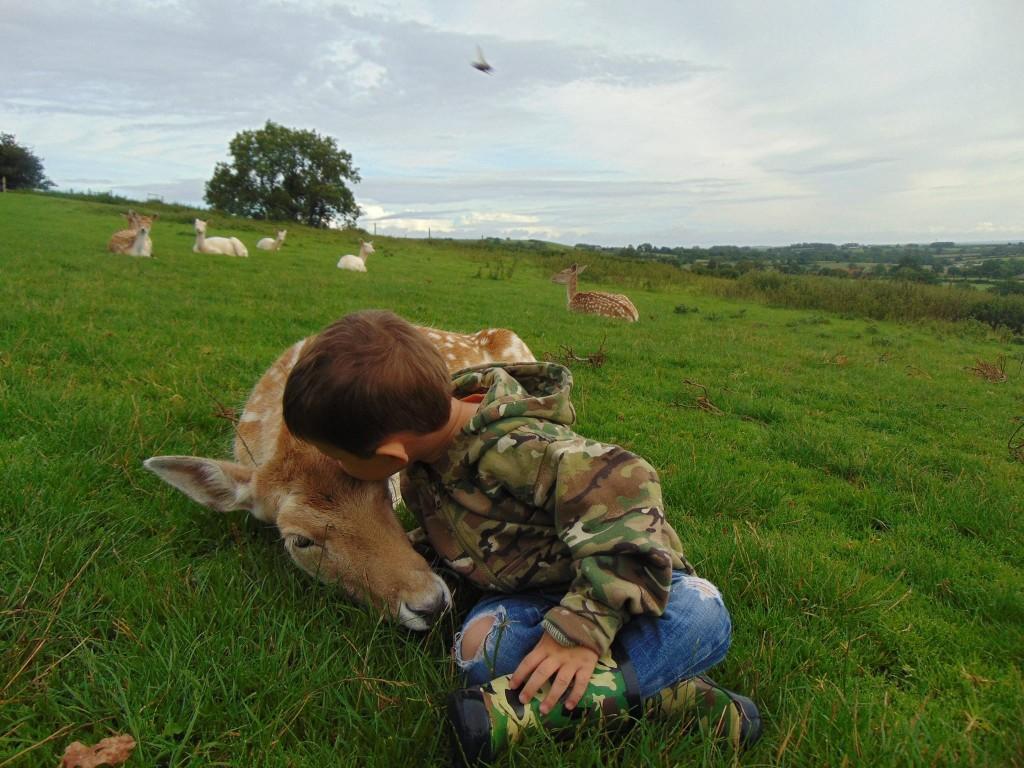 South West Deer - Somerset