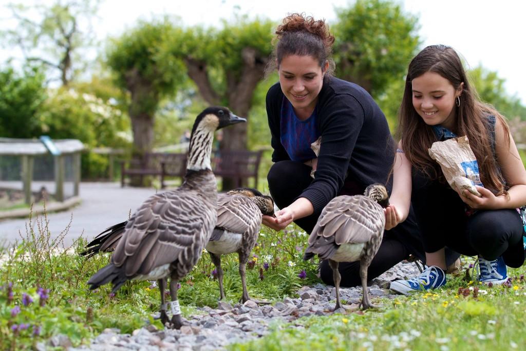 Slimbridge Wetland Centre - Cotswolds
