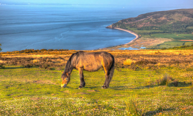 pony grazing on a field overlooking the somerset coast