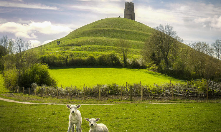 two spring lambs in a field infront of Glastonbury Tor