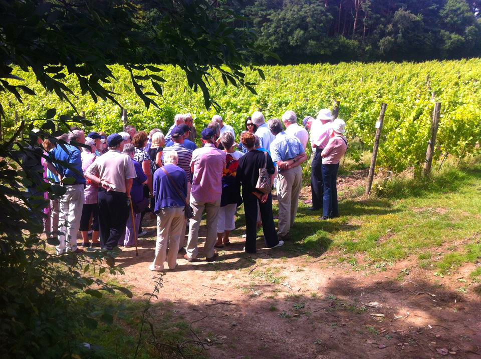 Sedlescombe Organic Vineyard - Sussex