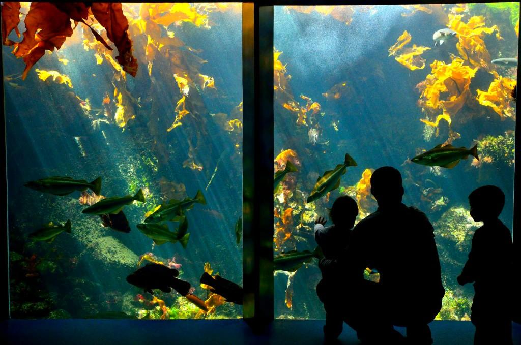 Océanopolis Aquarium