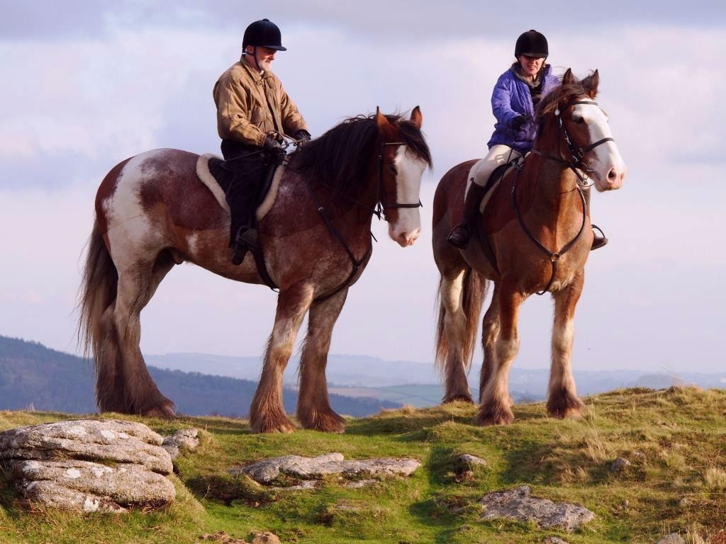 Adventure Clydesdale - Devon