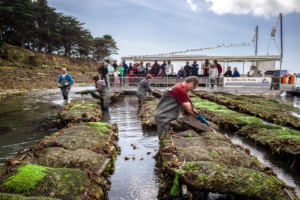 Au Rythme des Marées - Brittany