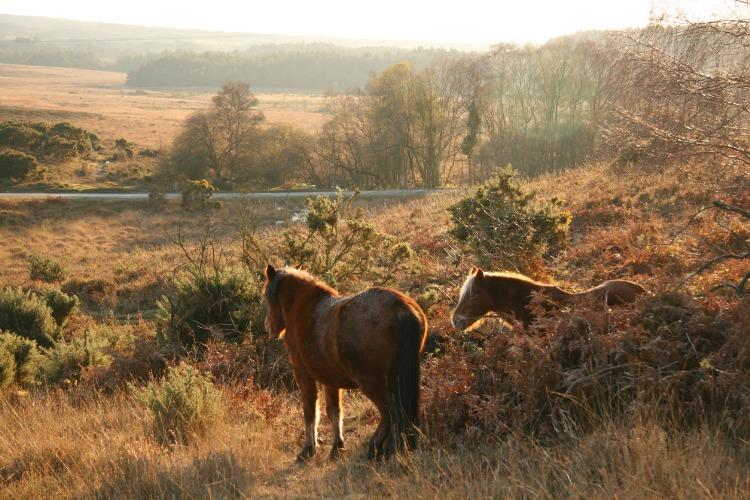 horse riding holiday