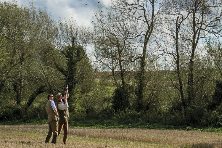 pheasant shooting in the woods of cotswolds