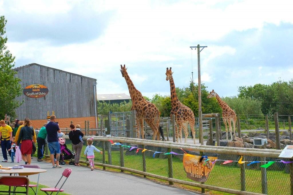 Folly Farm Adventure Park and Zoo  - Wales