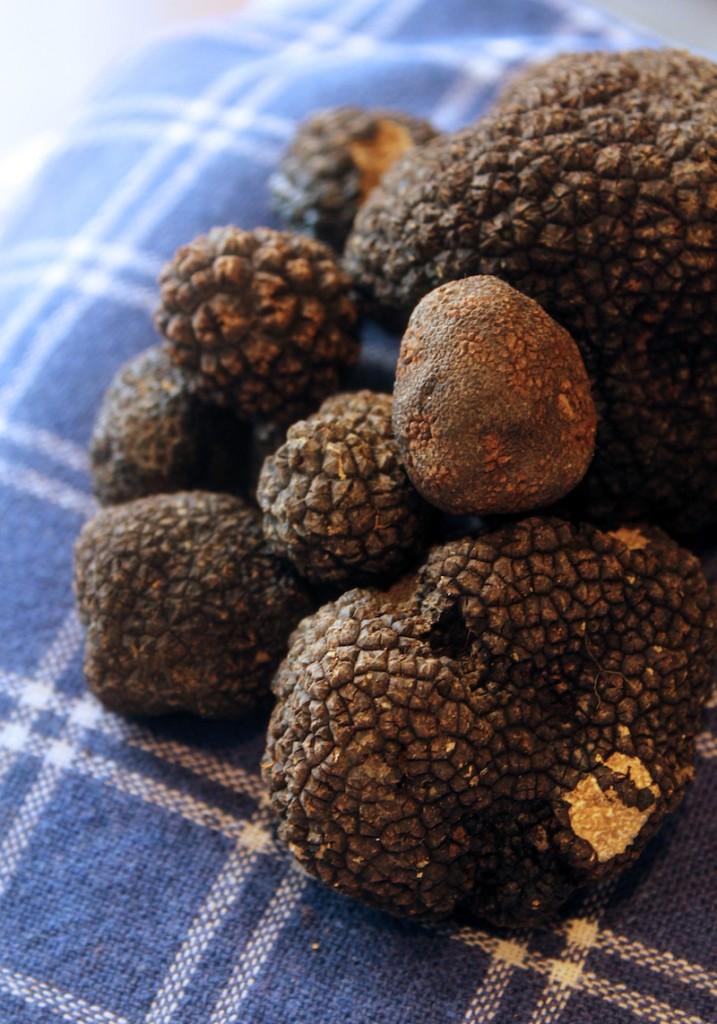 San Miniato Tuscany black truffles - Tuscany