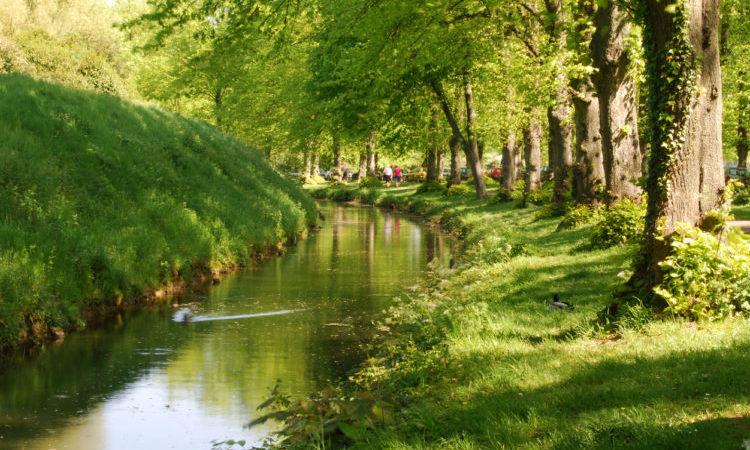 Stream in Sussex