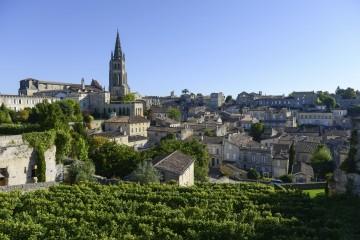 Saint-Emilion-Vineyard landscape-Vineyard south west of France, Bordeaux Vineyard