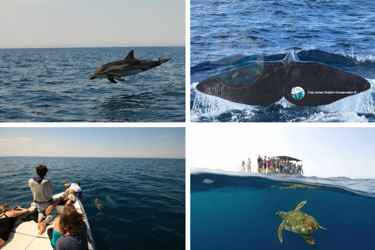 Jonian Dolphin Conservation - Puglia