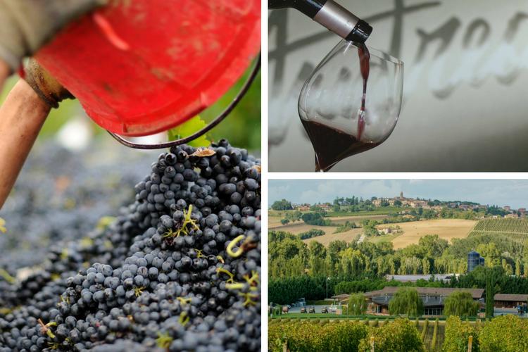 Castello Monte Vibiano Winery - Umbria