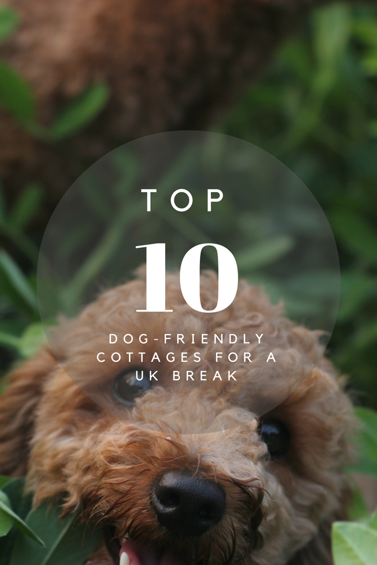 Here are 10 Dog-Friendly Cottages for a UK Break