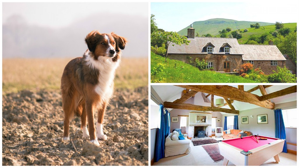 Valley Cottage - Pet friendly holiday - Wales