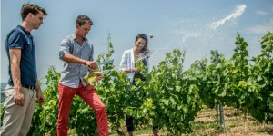Vineyard tour - Champagne - Winerist